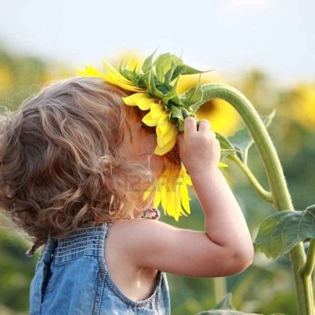 toddler with sunflower