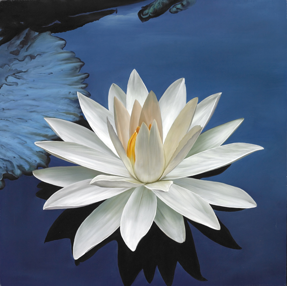 white lotus  new heaven on earth, Natural flower