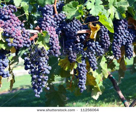 Abundant Fruit