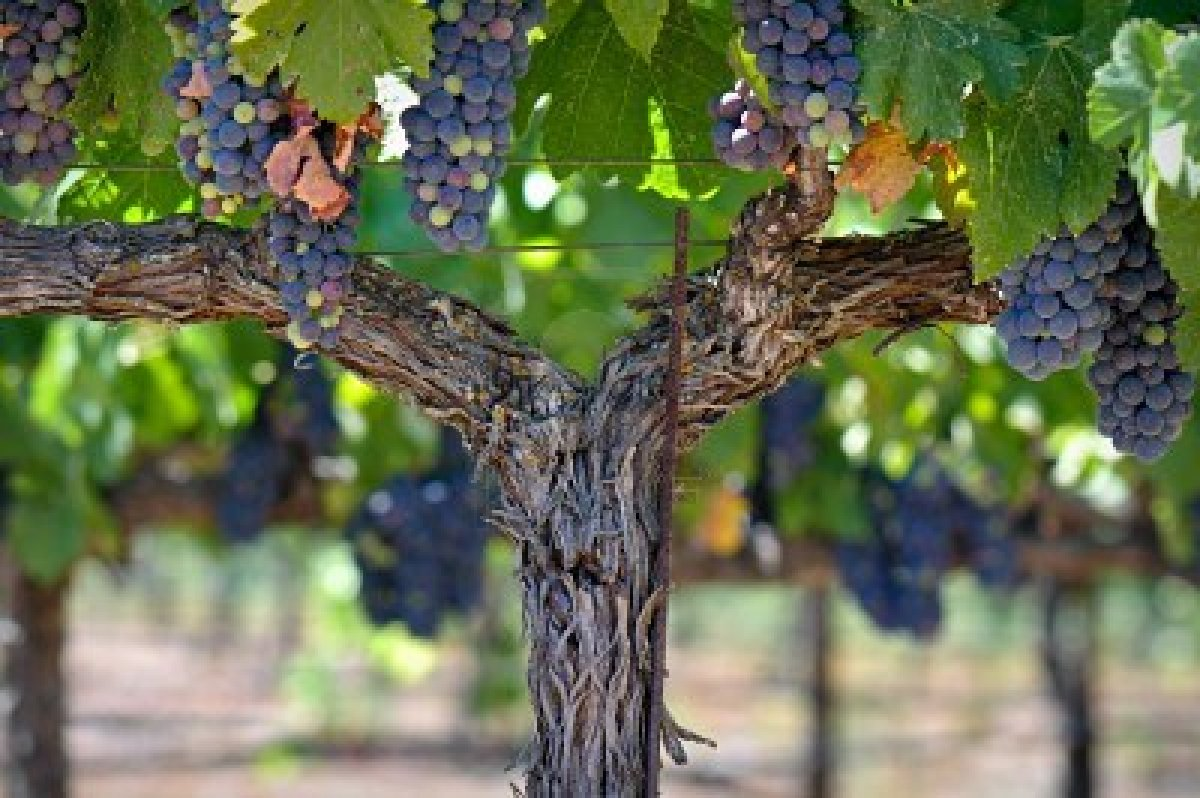 themes of unity in the grapes