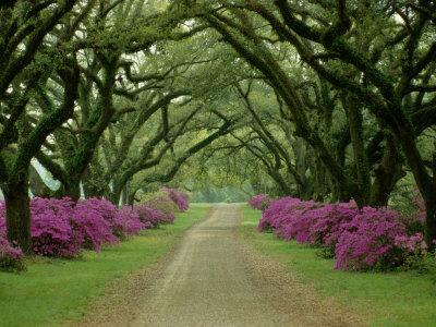 pathway canopy trees