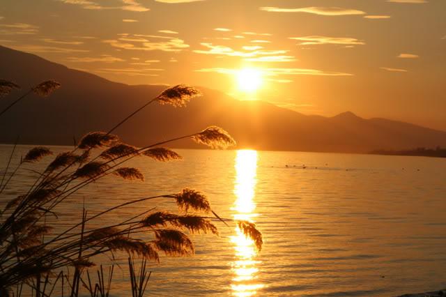 Sunset Golden Path reeds