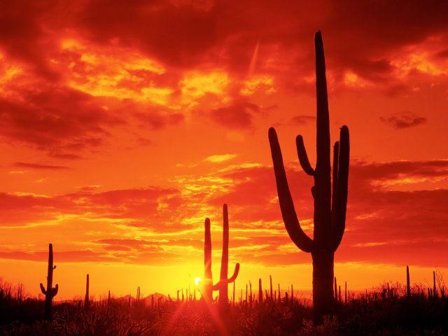Burning-Sunset-Saguaro-National-Park-Arizona