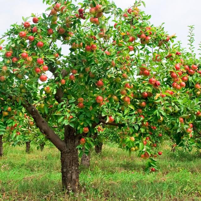 harvesttotable.com