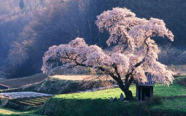images4.fanpop.com