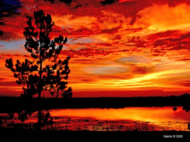 TREE_FORGROUND_BACKGROUND_COLORFUL_SUNSET_Wallpaper_5zh6v