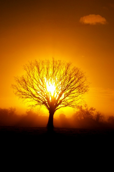 Sunrise Tree of Life