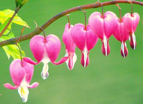 heart-flowers2