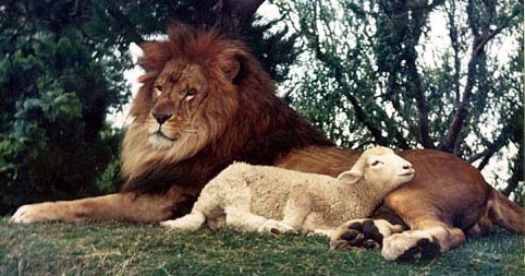 lion-and-lamb-lie-down-together