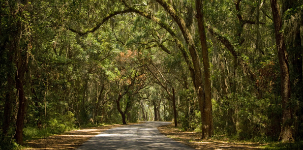 Wooded_Road_h