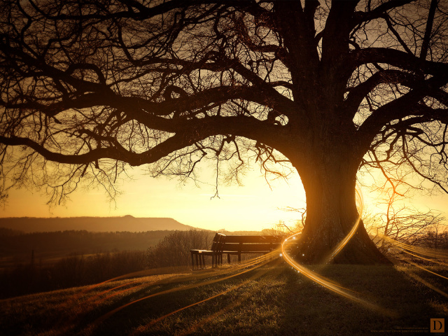 sunset-tree
