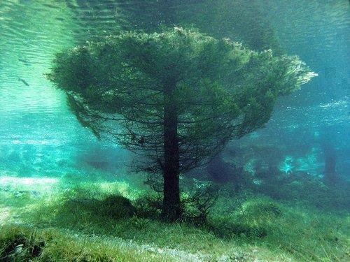 Tree submerged in water