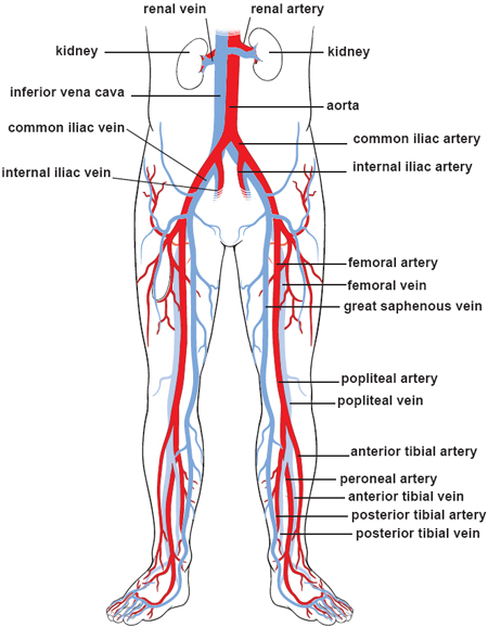 lower-body-circulation