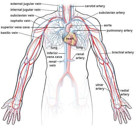 how to clear blocked arteries veins in your legs