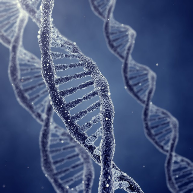 DNA: God's ladder in us!