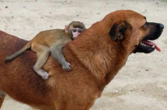 Animal-love-1