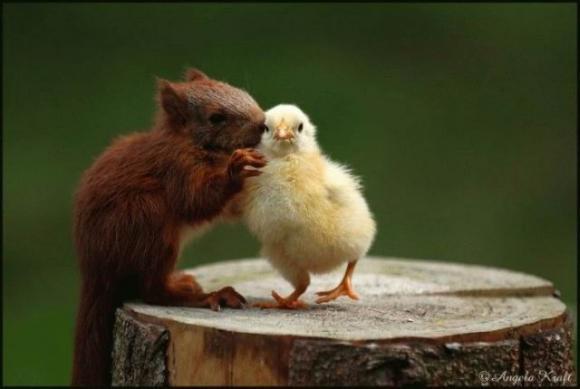 Animal-love-5