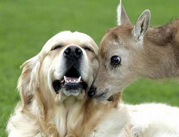 Animal-love-9