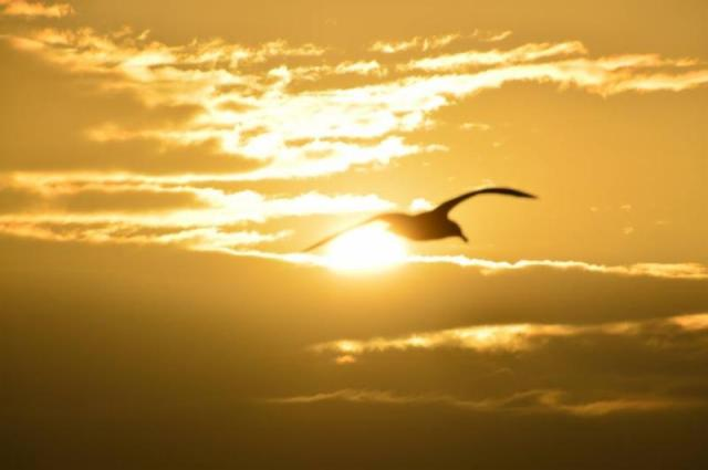 Holy Spirit Wings!