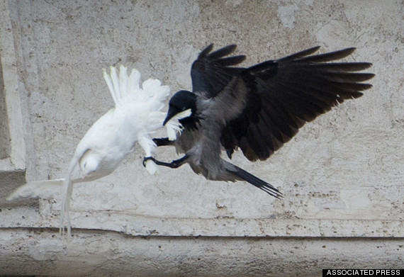 Vatican dove attacked by both sea gull and raven