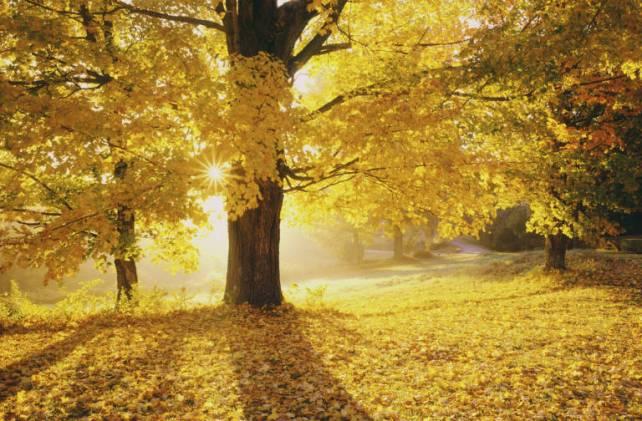 Christ Tree of Life