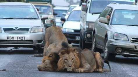 rebellion: rebel-lions: lyin' lions
