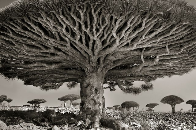 Beth Moon photo