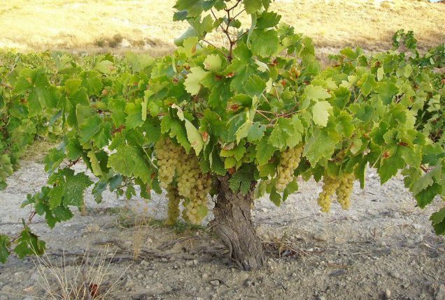 Be branches on the Vine of Transformation!