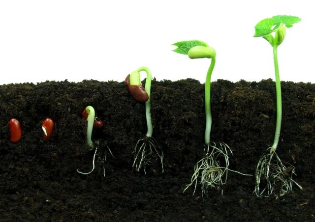 bean-seeds_shutterstock_57850783