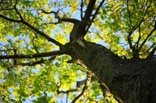 wood-nature-leaves-tree