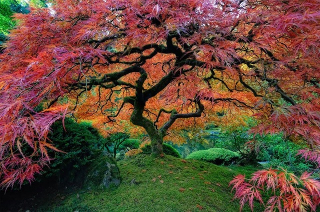 151055-r3l8t8d-880-amazing-trees-21