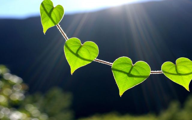 6944981-heart-leaves